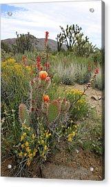 Mojave Spring Acrylic Print by Robin Street-Morris