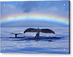 Mom And Calf Humpback Whales Off Maui Acrylic Print