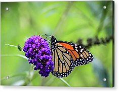 Acrylic Print featuring the photograph Monarch And Black Knight by Dawn Richards