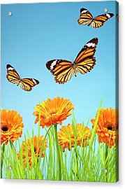 Monarch Butterflies With Grass And Acrylic Print by Chris Stein