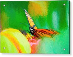 Monarch Butterfly Beautiful Smudge Acrylic Print