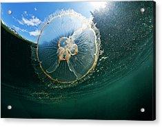 Moon Jellyfish, Alaska Acrylic Print