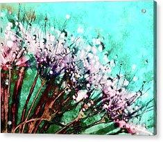 Morning Dew On Dandelions Acrylic Print