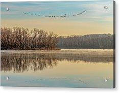 Acrylic Print featuring the photograph Morning Flight by Allin Sorenson