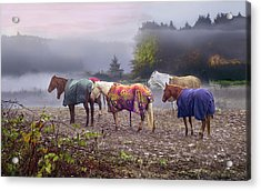 Acrylic Print featuring the photograph Morning Mudders by Jon Exley