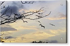 Morning Sky View Acrylic Print