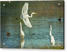 Acrylic Print featuring the photograph Morning Gold by Craig Leaper