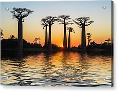 Morondava, Baobab Alley Acrylic Print by Gabrielle Therin-weise