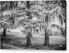 Moss Laden Trees 4132 Acrylic Print