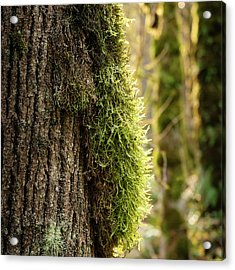 Acrylic Print featuring the photograph Moss On Bark by Whitney Goodey