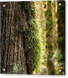 Moss On Bark Acrylic Print