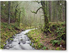 Mossy Landscape Acrylic Print