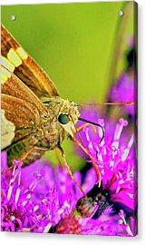 Moth On Purple Flower Acrylic Print