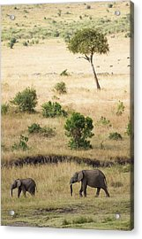 Mother And Baby Elephant In Savanna Acrylic Print by Universal Stopping Point Photography