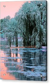 Mother Willow Infrared Acrylic Print