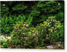 Mountain Laurel And Ferns Acrylic Print