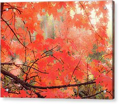 Mountain Maple Color Acrylic Print by Leland D Howard