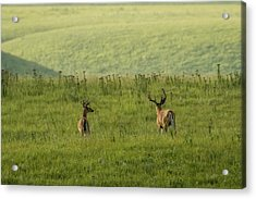 Acrylic Print featuring the photograph Moving Across The Prairie by Scott Bean
