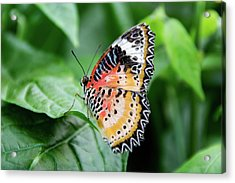 Multi Colored Butterfly Acrylic Print