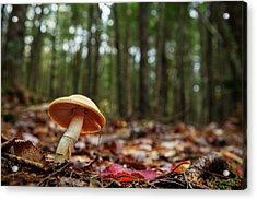 Mushroom Growing In Forest Acrylic Print by Laszlo Podor