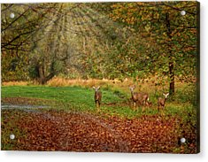 Acrylic Print featuring the photograph My Deer Family by Susan Candelario