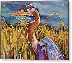 Myakka Blue Heron Acrylic Print
