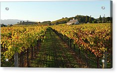 Napa Valley Vineyard In Autumn Acrylic Print by Leezsnow