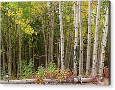Acrylic Print featuring the photograph Nature Fallen by James BO Insogna