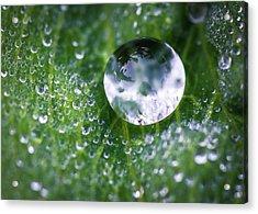 Natures Crystal Ball Acrylic Print
