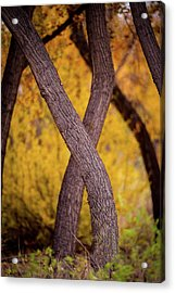 Nature's Font Acrylic Print