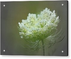 Nature's Lace Acrylic Print