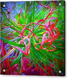 Nature's  Ribbons Acrylic Print