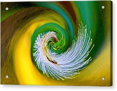 Nature's Spiral Acrylic Print