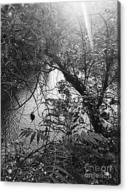 Acrylic Print featuring the photograph Naturescape Black And White by Rachel Hannah