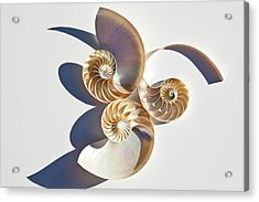 Nautilus 0425 Acrylic Print