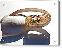 Nautilus 0469 Acrylic Print