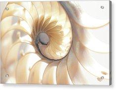 Nautilus 0472 Acrylic Print