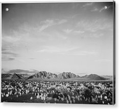 Near Death Valley National Monument Acrylic Print