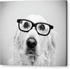 Nerd Dog Acrylic Print