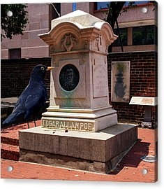 Acrylic Print featuring the photograph Nevermore Quoth The Raven by Bill Swartwout Fine Art Photography