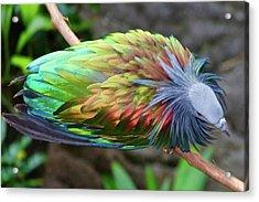Nicobar Pigeon Acrylic Print