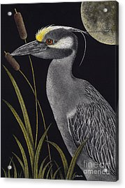 Night Watchman Acrylic Print