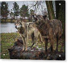 Noisy Wolf Acrylic Print