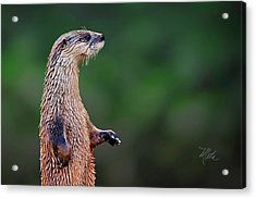 Norman The Otter Acrylic Print