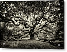 Oak Of The Angels - Sepia Acrylic Print