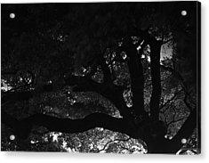 Oak Tree At Night Acrylic Print by Edward Swearingen
