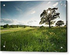 Oak Tree Acrylic Print by Jeremy Walker