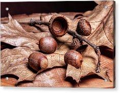 Oak Tree Macro Acrylic Print