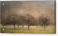 Oak Trees In Fog Acrylic Print