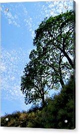 Oaks And Sky Acrylic Print